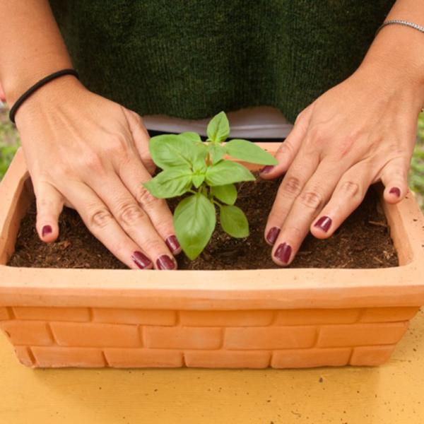 Reciclaje de orgánicos – reduciendo nuestro impacto, creando vida