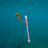 No culpes a la playa, una llamada a la acción por el día internacional de limpieza de playas